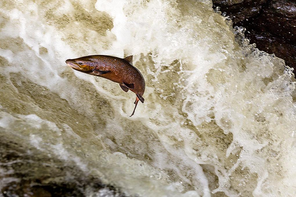 IMAGE: http://www.capnfishy.co.uk/images/Buchanty2013/Buchanty2013_7276.jpg