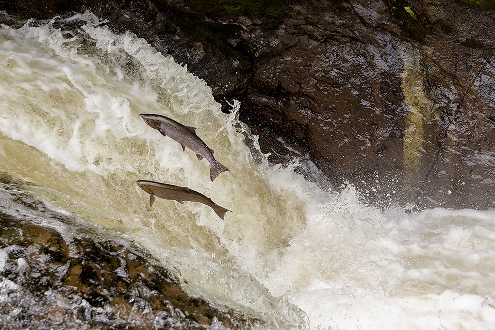 IMAGE: http://www.capnfishy.co.uk/images/Buchanty2013/Buchanty2013_7346.jpg