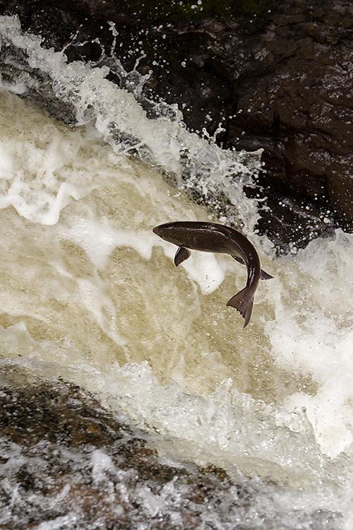 IMAGE: http://www.capnfishy.co.uk/images/Buchanty2013/Buchanty2013_7504.jpg