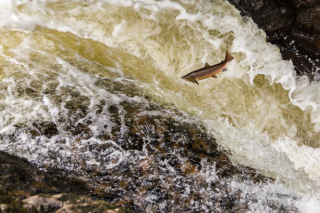 IMAGE: http://www.capnfishy.co.uk/images/Buchanty2013/Buchanty2013_7586.jpg