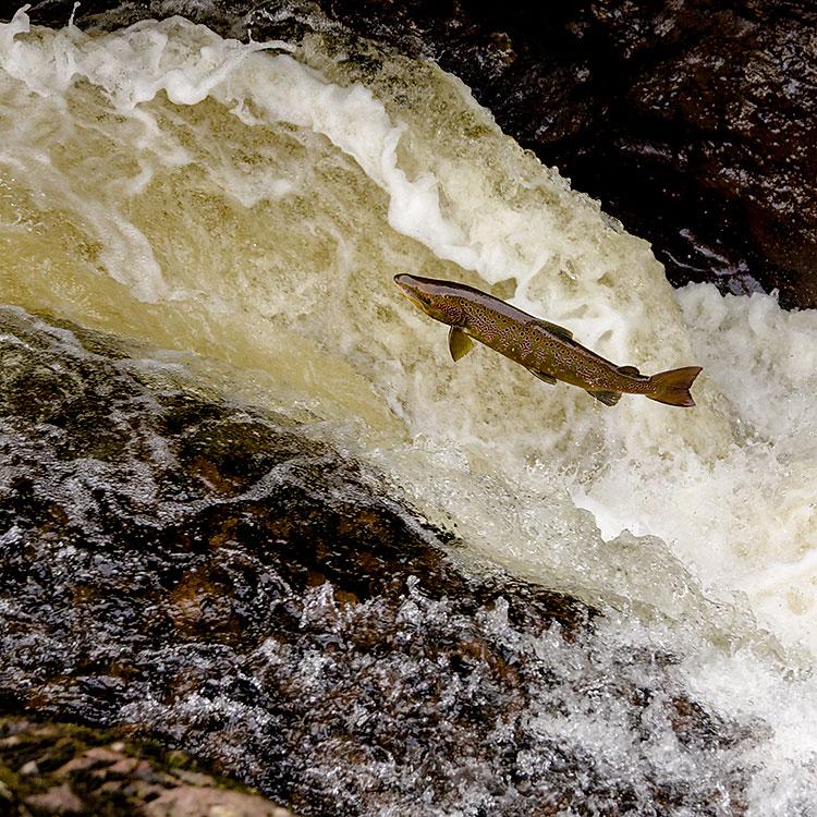 IMAGE: http://www.capnfishy.co.uk/images/Buchanty2013/Buchanty2013_7694.jpg