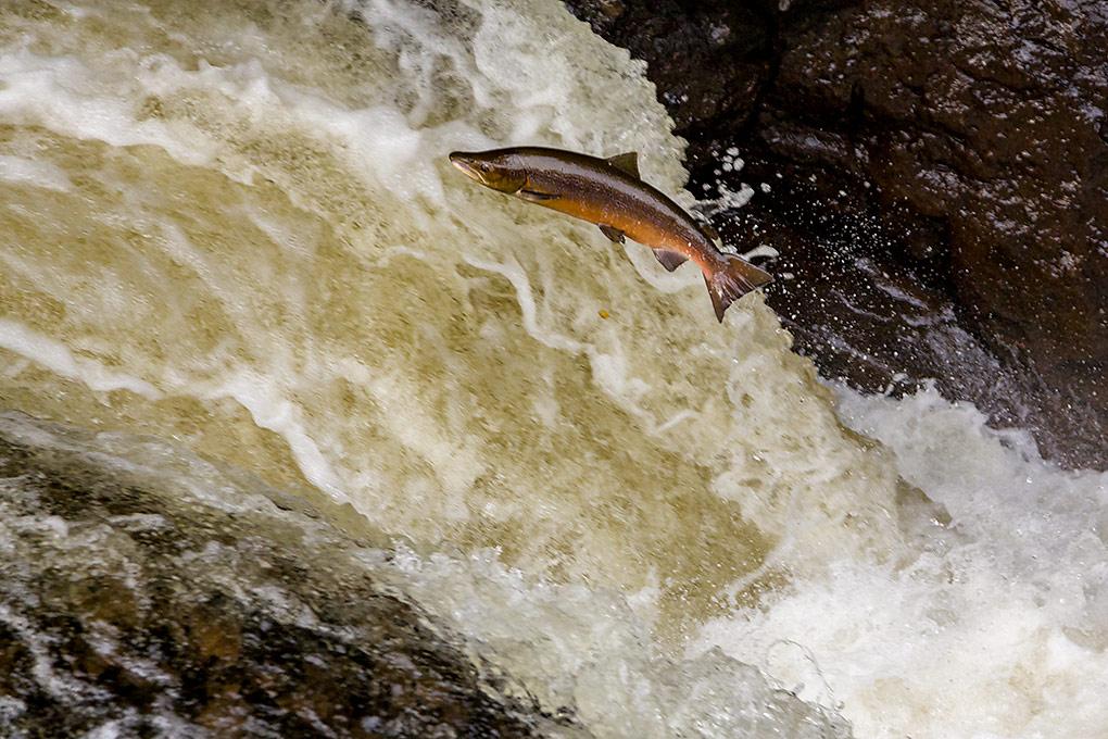 IMAGE: http://www.capnfishy.co.uk/images/Buchanty2013/Buchanty2013_7754.jpg