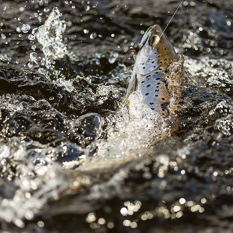 IMAGE: http://www.capnfishy.co.uk/images/LomondApr13/Lomond25Apr13_0610.jpg