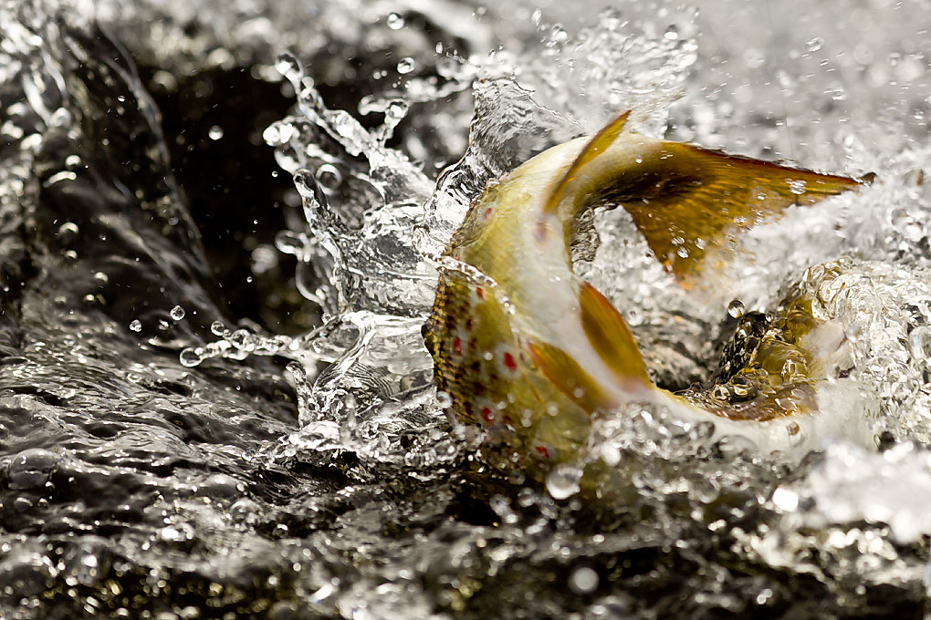IMAGE: http://www.capnfishy.co.uk/images/Orkney2012/Orkney2012_2446.jpg