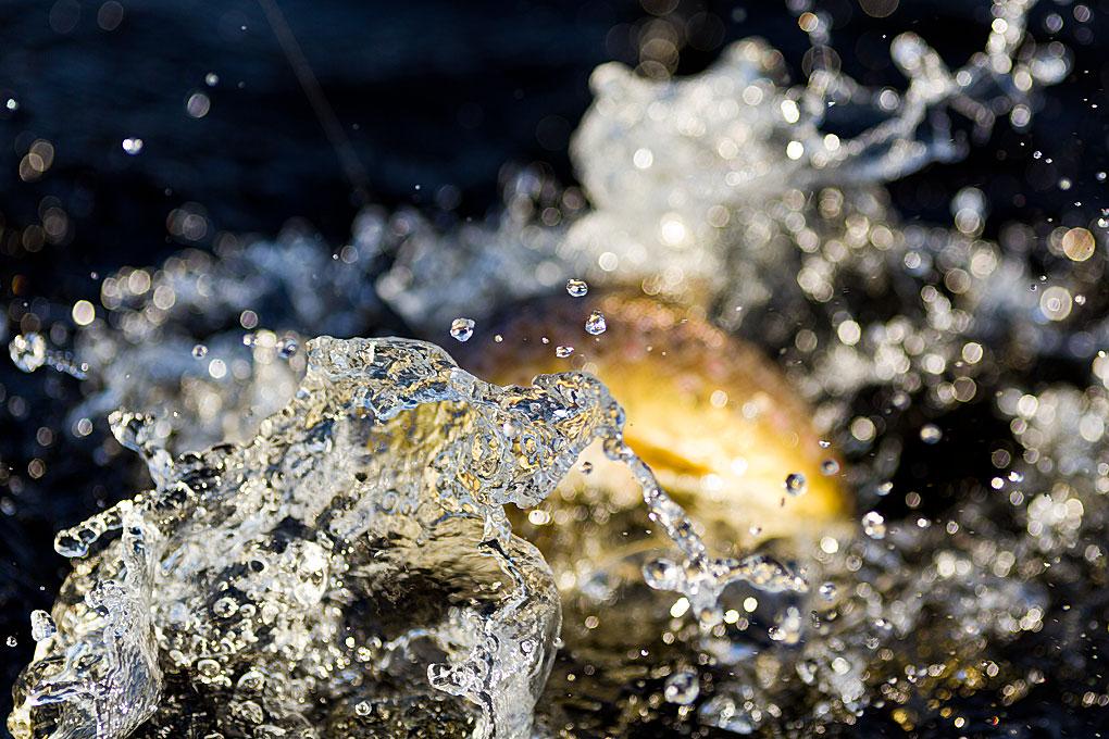 IMAGE: http://www.capnfishy.co.uk/images/Orkney2012/Orkney2012_2655.jpg