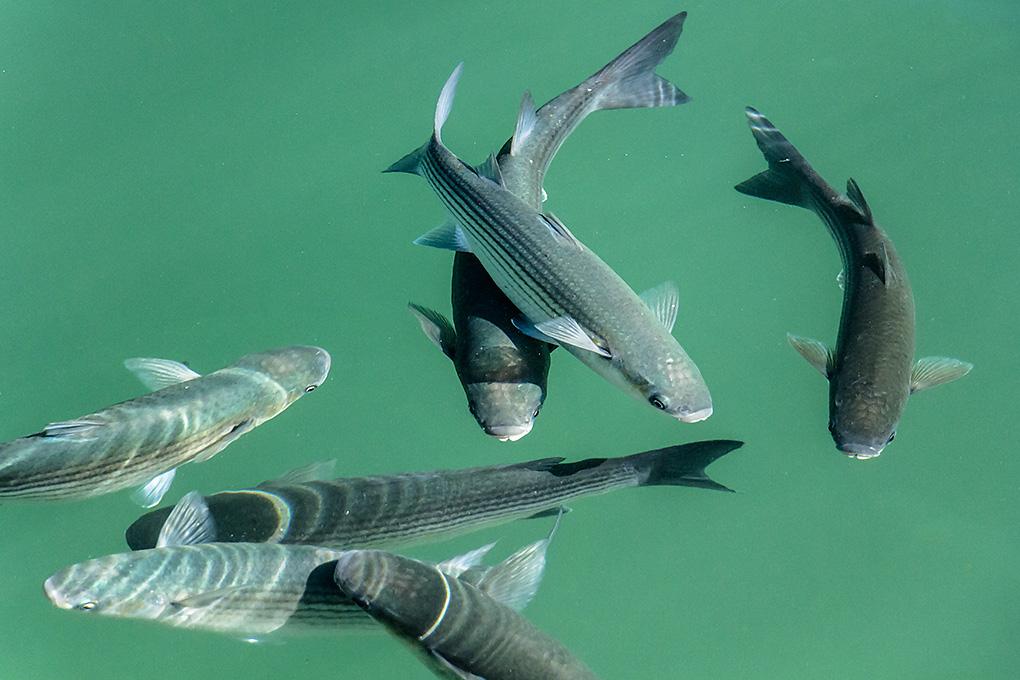 IMAGE: http://www.capnfishy.co.uk/images/Spain/Spain13_0174.jpg