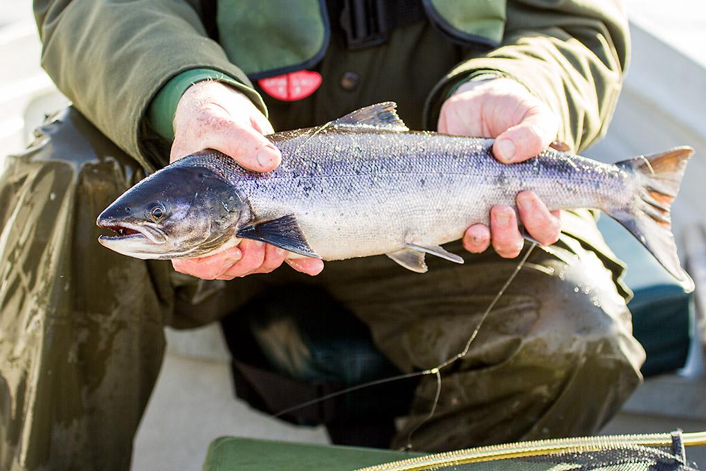 Photos of fish page 25 for Colorado fish species