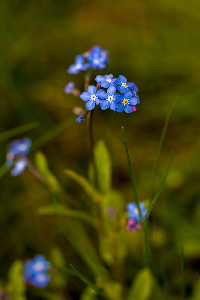 IMAGE: http://www.capnfishy.co.uk/wp-content/uploads/2017/04/Flowers22Apr18_2441.jpg