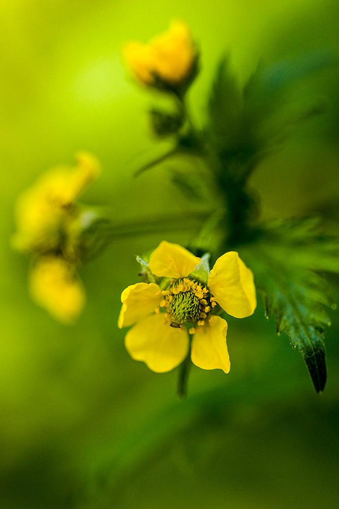 IMAGE: http://www.capnfishy.co.uk/wp-content/uploads/2017/05/Flowers13May18_4163.jpg