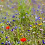 Flowers05Aug17_5337