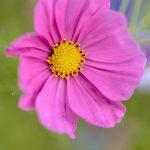 Flowers05Aug17_5361