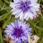 Flowers05Aug17_5368