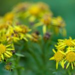 Flowers23Nov17_9845
