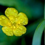 Flowers23Nov17_9860