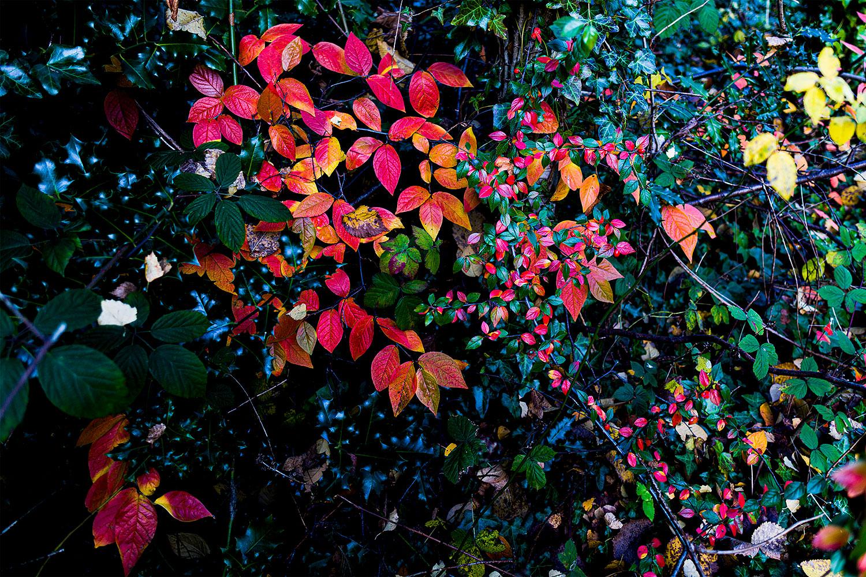 IMAGE: http://www.capnfishy.co.uk/wp-content/uploads/2017/11/Flowers28Nov19_4122-HDR.jpg