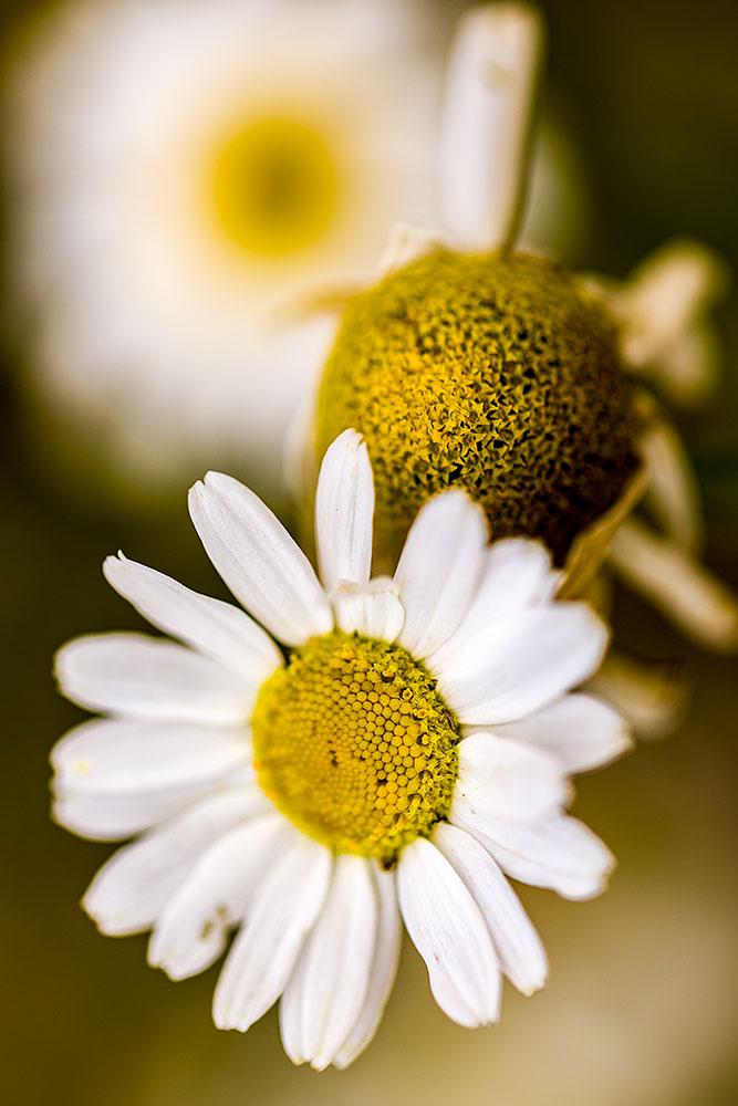 IMAGE: http://www.capnfishy.co.uk/wp-content/uploads/2018/07/Flowers24Jul18_1221.jpg