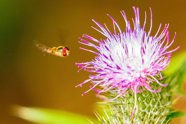 IMAGE: http://www.capnfishy.co.uk/wp-content/uploads/2018/08/Flowers03Aug18_1575.jpg