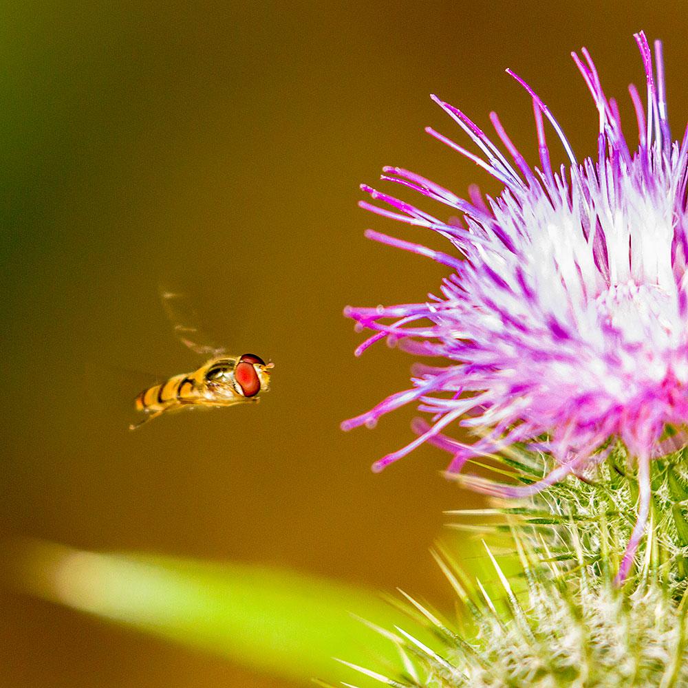IMAGE: http://www.capnfishy.co.uk/wp-content/uploads/2018/08/Flowers03Aug18_1576.jpg