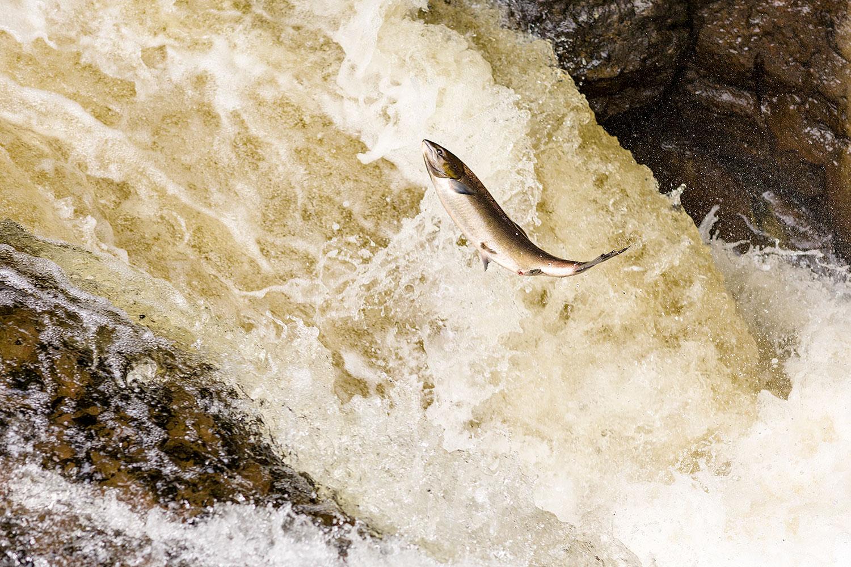 IMAGE: http://www.capnfishy.co.uk/wp-content/uploads/2018/09/Buchanty21Sep18_3782.jpg