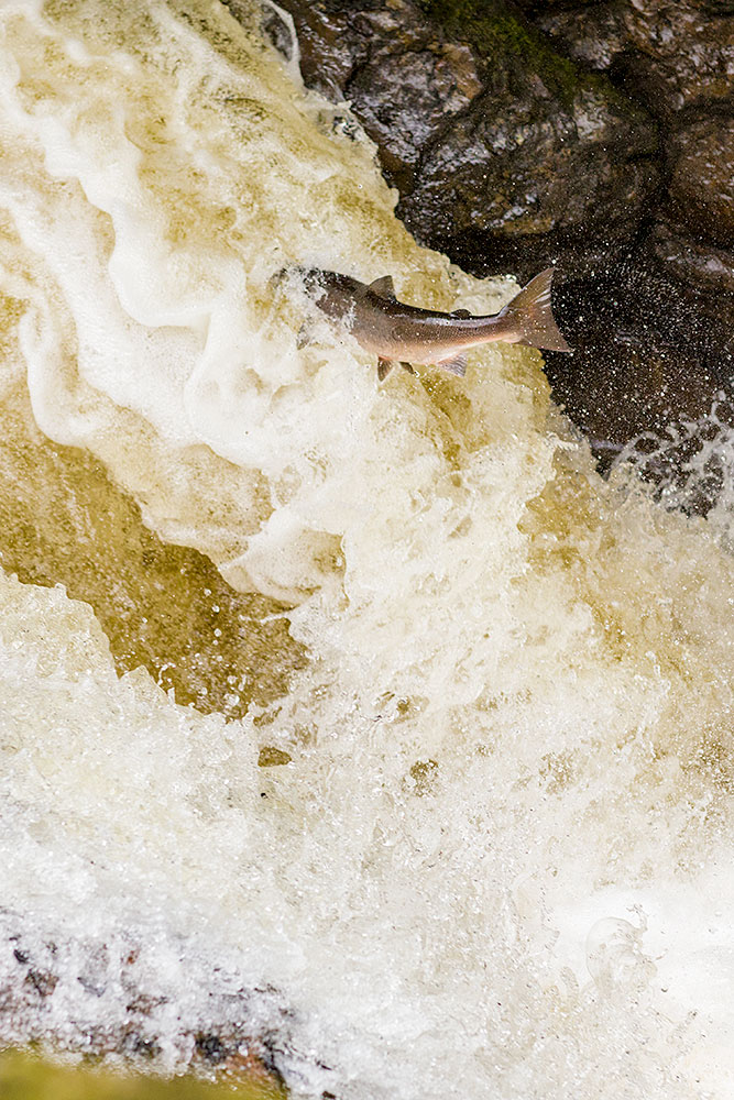 IMAGE: http://www.capnfishy.co.uk/wp-content/uploads/2018/09/Buchanty21Sep18_3917.jpg