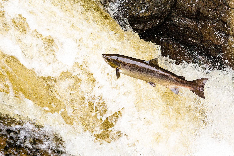 IMAGE: http://www.capnfishy.co.uk/wp-content/uploads/2018/09/Buchanty21Sep18_4045.jpg