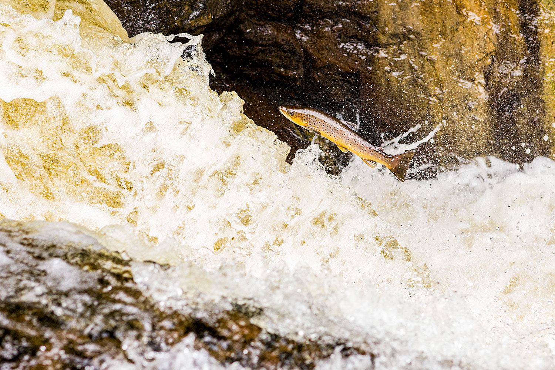 IMAGE: http://www.capnfishy.co.uk/wp-content/uploads/2018/09/Buchanty21Sep18_4089.jpg