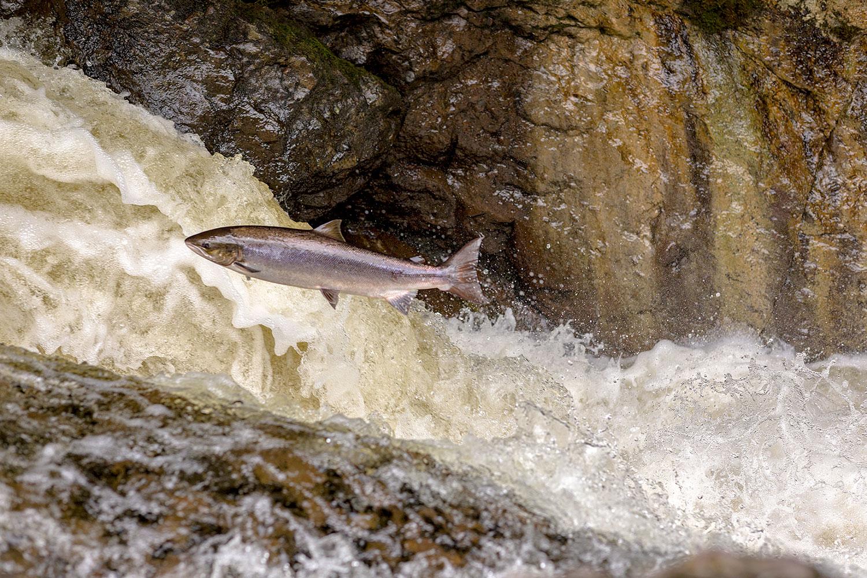 IMAGE: http://www.capnfishy.co.uk/wp-content/uploads/2018/09/Buchanty21Sep18_4188.jpg