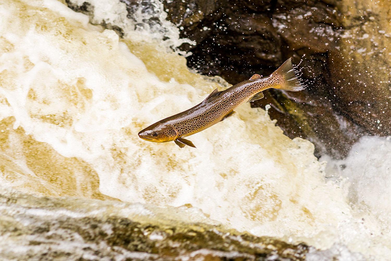 IMAGE: http://www.capnfishy.co.uk/wp-content/uploads/2018/09/Buchanty21Sep18_4351.jpg