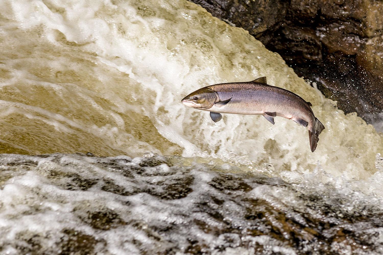 IMAGE: http://www.capnfishy.co.uk/wp-content/uploads/2018/09/Buchanty21Sep18_4363.jpg