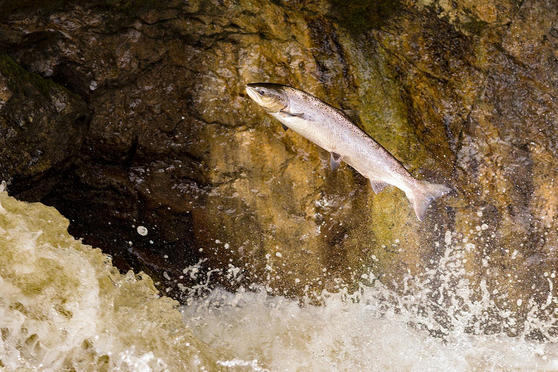 IMAGE: http://www.capnfishy.co.uk/wp-content/uploads/2018/09/Buchanty21Sep18_4408.jpg