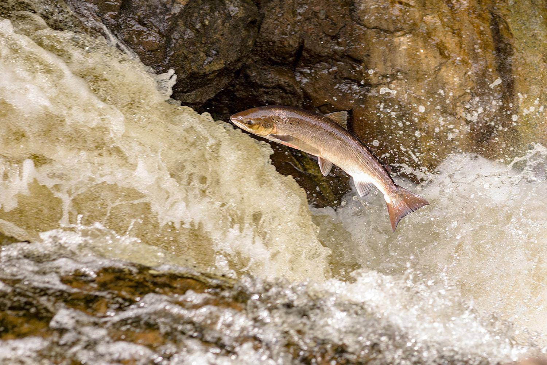 IMAGE: http://www.capnfishy.co.uk/wp-content/uploads/2018/09/Buchanty21Sep18_4412.jpg