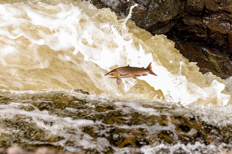 IMAGE: http://www.capnfishy.co.uk/wp-content/uploads/2018/09/Buchanty21Sep18_4496.jpg