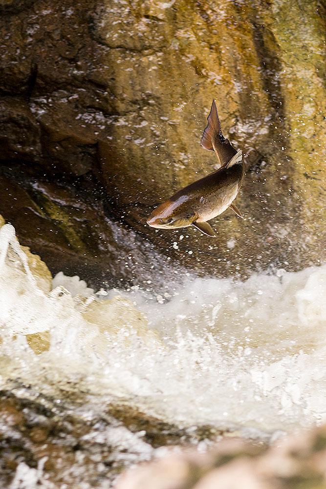 IMAGE: http://www.capnfishy.co.uk/wp-content/uploads/2018/09/Buchanty21Sep18_4522.jpg