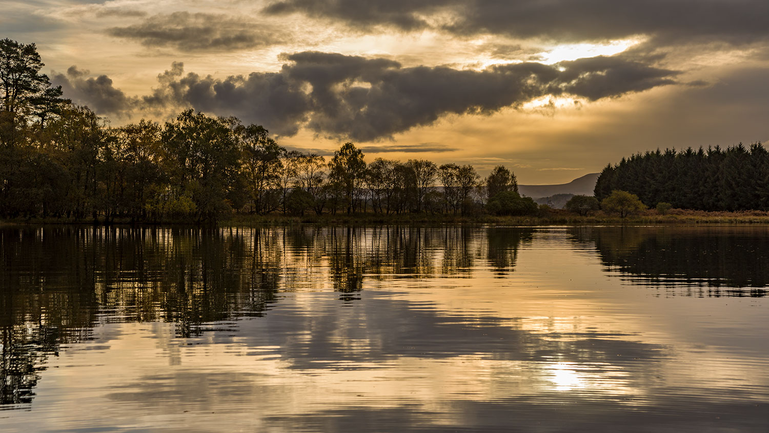 IMAGE: http://www.capnfishy.co.uk/wp-content/uploads/2018/10/Menteith18Oct18_6219.jpg