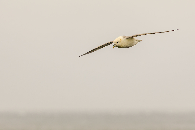 IMAGE: http://www.capnfishy.co.uk/wp-content/uploads/2019/07/Orkney2019_7836.jpg