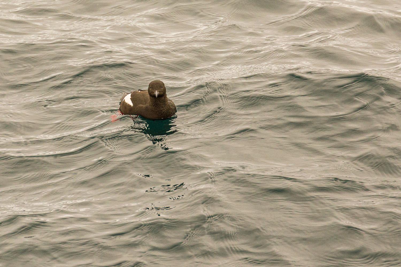 IMAGE: http://www.capnfishy.co.uk/wp-content/uploads/2019/07/Orkney2019_7843.jpg