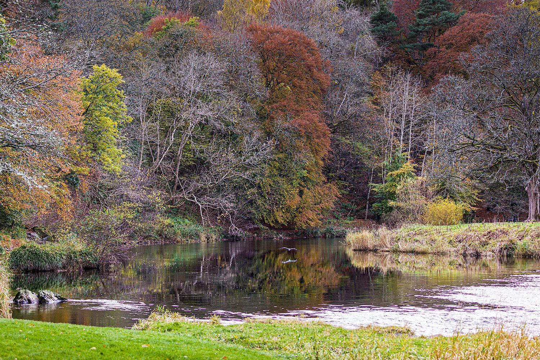 IMAGE: http://www.capnfishy.co.uk/wp-content/uploads/2019/10/Peebles30Oct19_3548.jpg