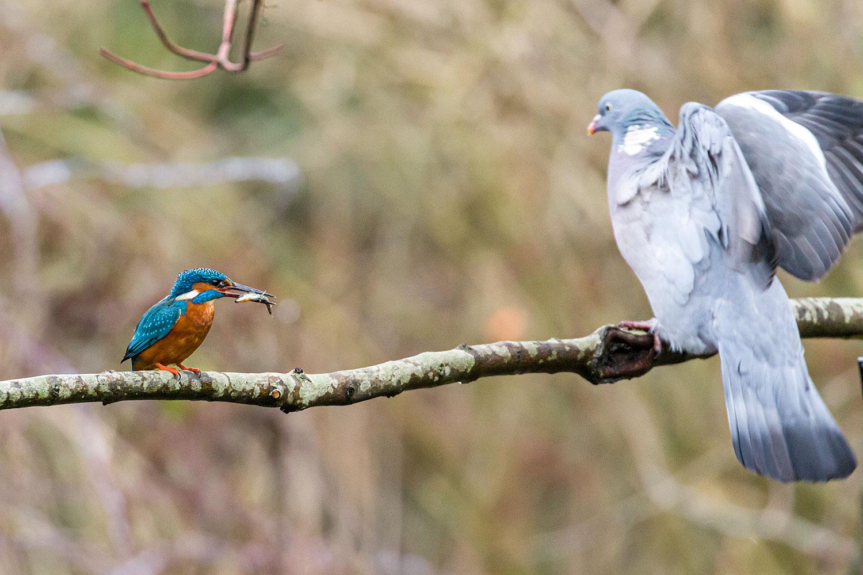 IMAGE: http://www.capnfishy.co.uk/wp-content/uploads/2019/12/Botanics20Dec19_4716.jpg