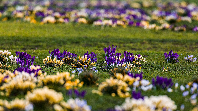 Flowers01Mar21_8583.jpg