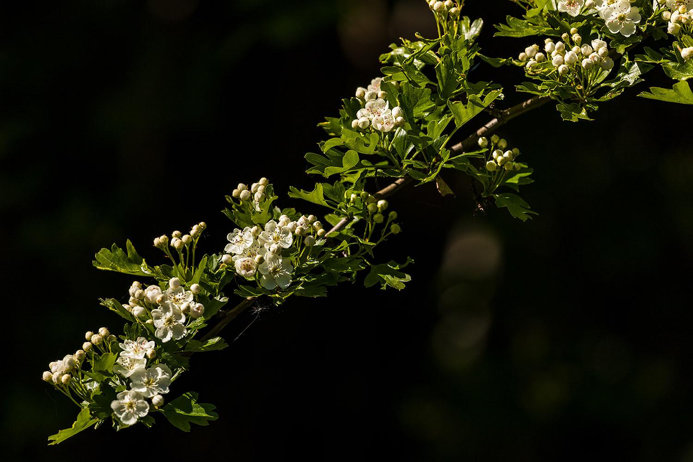 Flowers176May18_4793.jpg