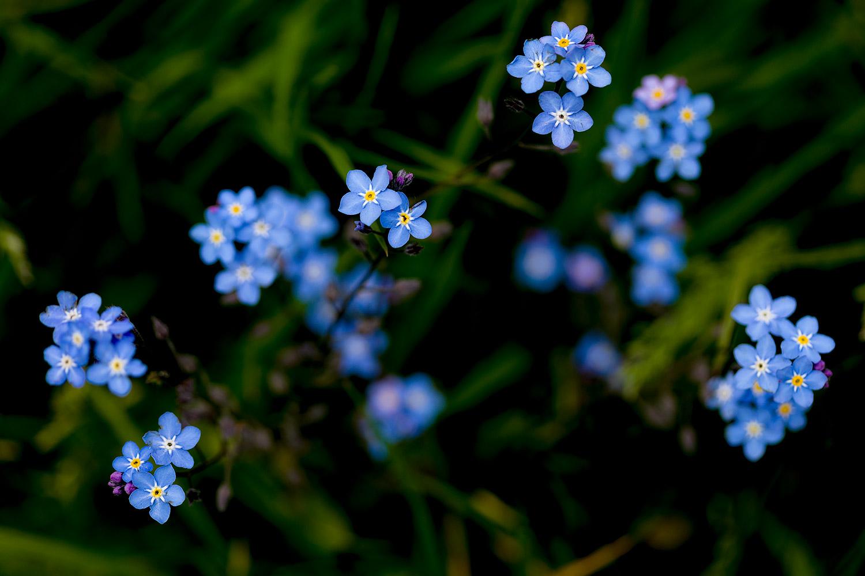 Flowers24May2017_5389.jpg