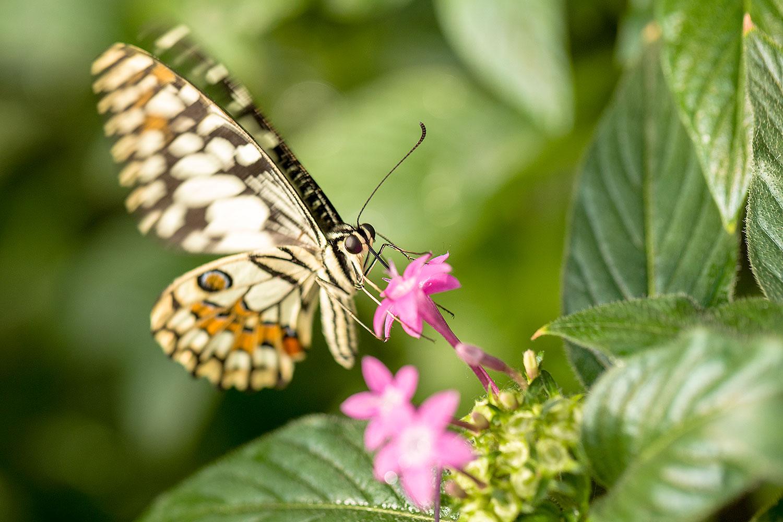 Butterflies20Feb18_7363.jpg