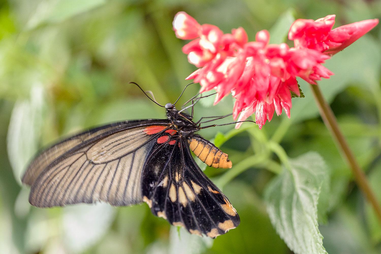 Butterflies20Feb18_7642.jpg