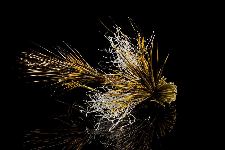 Mayflies-27Jun18_8886.jpg