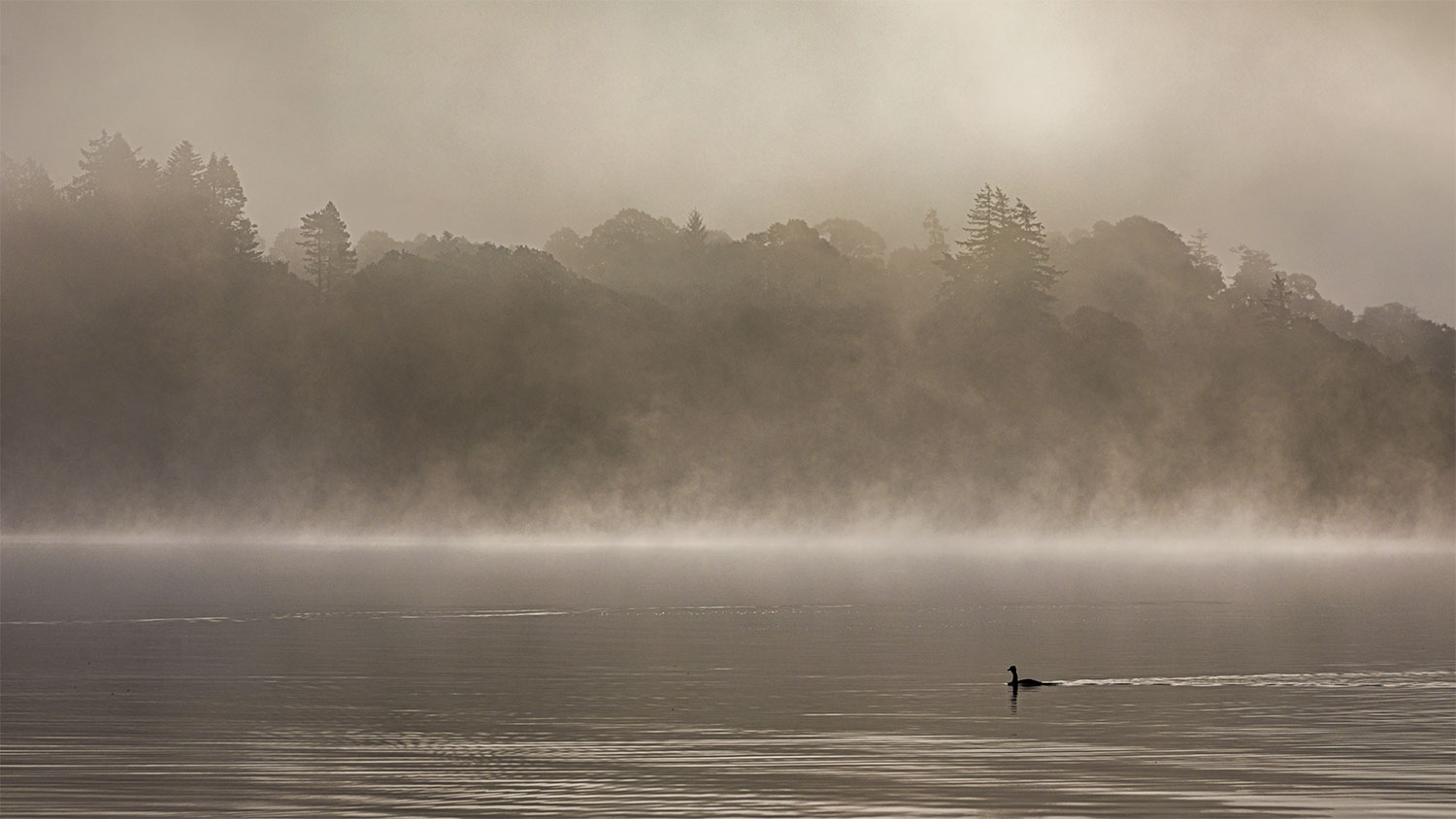 IMAGE: https://www.capnfishy.co.uk/wp-content/uploads/2020/09/Menteith24Sep20_2562-HDR.jpg