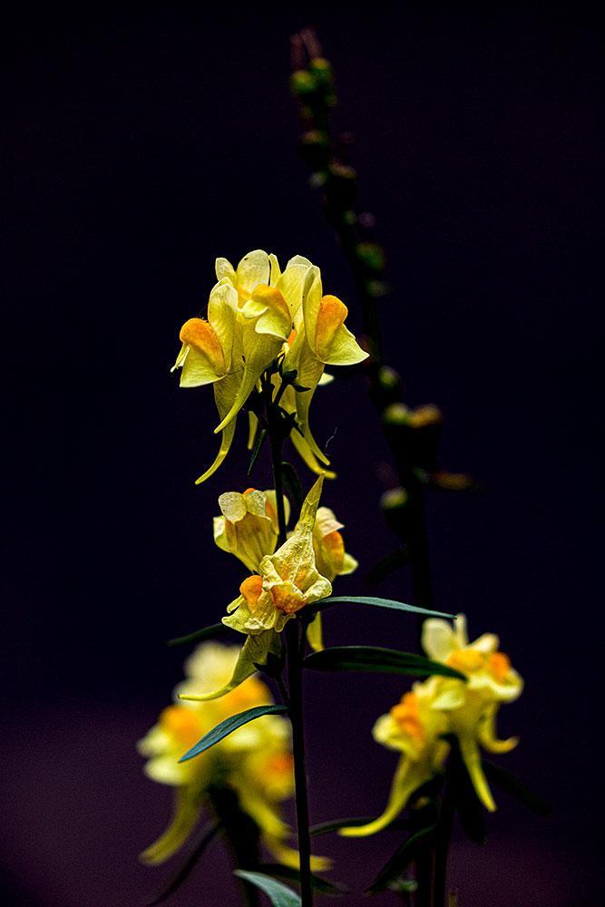 Flowers18Oct20_4666.jpg